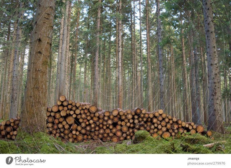 Lager Landwirtschaft Forstwirtschaft Umwelt Natur Baum Wald Ordnung Holz Brennholz Holzstapel Vorrat Schwarzwald Farbfoto Außenaufnahme Menschenleer