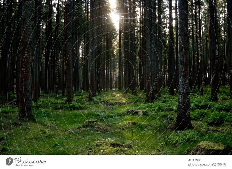 Morgens Natur Sommer Baum Landschaft Wald Umwelt dunkel Frühling Stimmung Klima Ausflug Moos Klimawandel