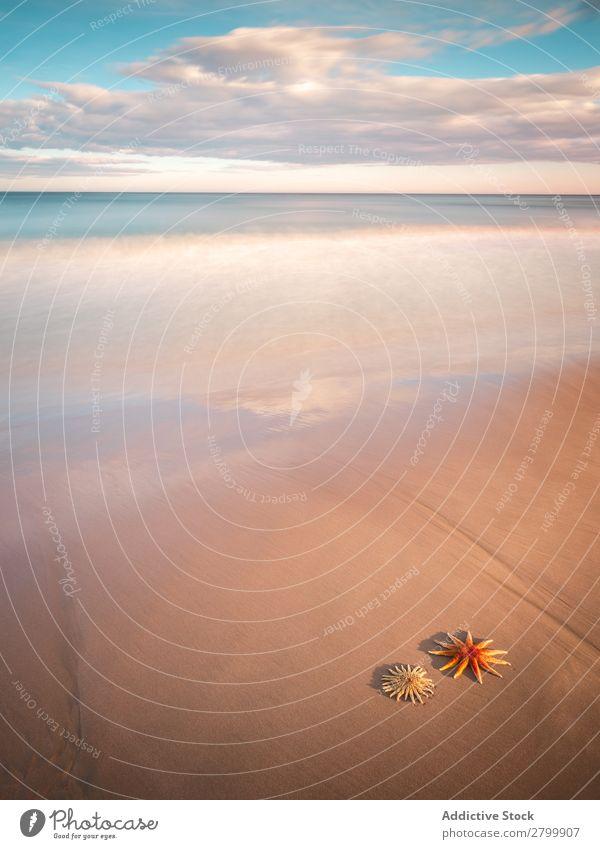 Seesterne an der Sandküste in der Nähe des Meeres Küste Himmel Wolken Wellen Natur Strand Sommer marin Ferien & Urlaub & Reisen Ausflug Weichtier Menschenleer