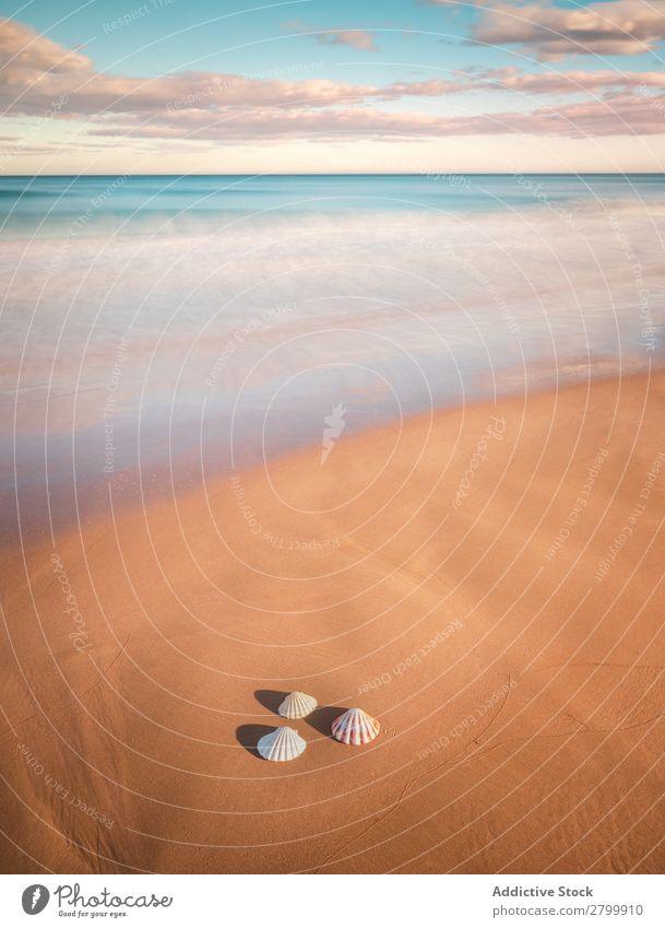 Weichtiere auf Sand in der Nähe des wogenden Meeres Resort Küste Wellen Natur Strand Sommer marin Ferien & Urlaub & Reisen nass Ausflug Menschenleer exotisch