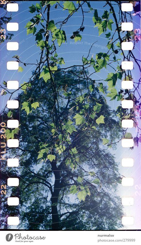 perforierte Natur Pflanze Baum Sonne Freude Tier Blatt Umwelt Liebe Garten Kunst Stimmung außergewöhnlich natürlich Freizeit & Hobby authentisch