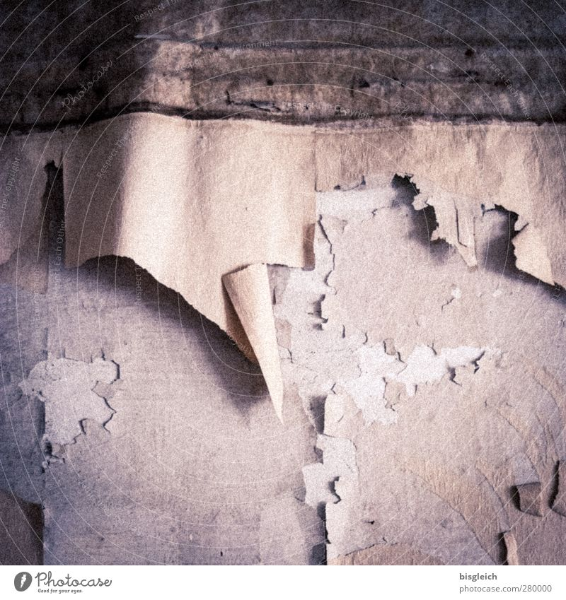 maroder Charme V Tapete Ruine Mauer Wand Putz alt kaputt trashig trist grau rosa Farbfoto Innenaufnahme Menschenleer Tag