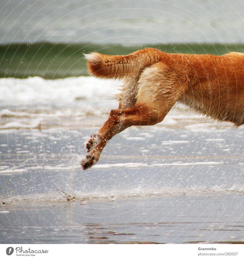 no time. for complete dogs Hund Wasser Tier springen laufen Fell Nordsee rennen Lebensfreude Schwanz