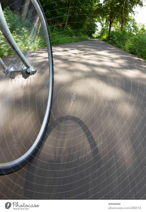 Im Rausch der Geschwindigkeit Natur Ferien & Urlaub & Reisen Sommer Baum Freude Wald Straße Sport Bewegung Freiheit grau Fahrrad Ausflug Geschwindigkeit Lifestyle fahren