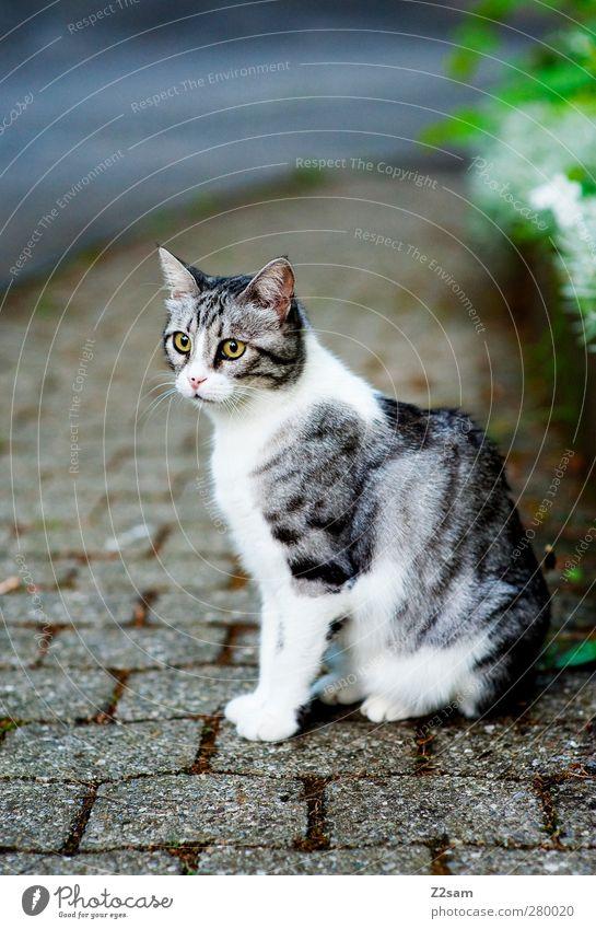 da is die Mietze! Katze schön Tier ruhig dunkel Straße kalt Gras grau klein Tierjunges sitzen ästhetisch Sträucher niedlich beobachten