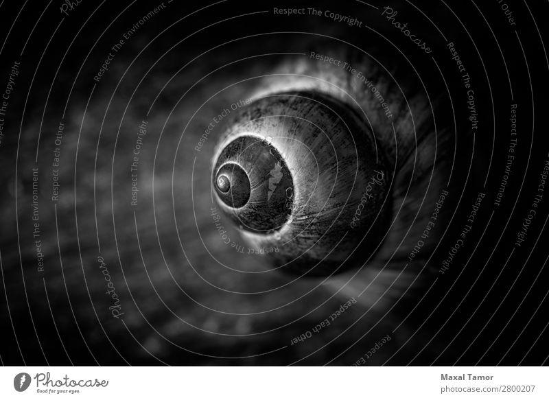 Natur Sommer Meer Tier Strand schwarz natürlich Küste braun Europa Lebewesen exotisch Spirale Konsistenz Panzer Biologie