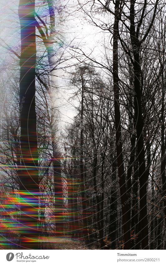 Licht ins Dunkel Umwelt Natur Pflanze Himmel Herbst Klima Wetter Baum Wiese außergewöhnlich dunkel Gefühle Sorge Hoffnung mehrfarbig Spektralfarbe Prisma