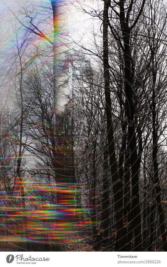 1300. Hoffnung Himmel Natur Pflanze blau grün weiß Baum Wald schwarz gelb Umwelt natürlich Wege & Pfade Gefühle Stimmung ästhetisch