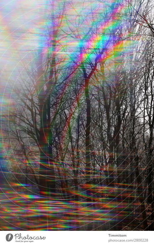 1400. Laßt uns auf die Reise gehn Himmel Natur Pflanze Landschaft Wald Leben Umwelt Wege & Pfade Gefühle ästhetisch Neugier Doppelbelichtung Prisma