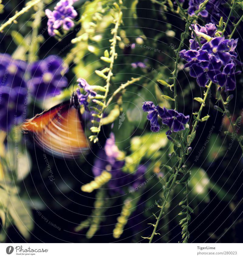 Natur grün schön Sommer Pflanze Tier ruhig schwarz Wärme Bewegung klein Blüte hell Zeit orange fliegen
