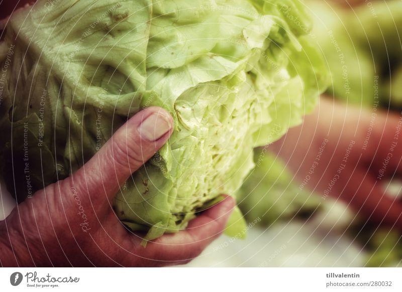 Da ham wa den Salat Lebensmittel Gemüse Salatbeilage Ernährung Bioprodukte Pflanze hell lecker grün Grünpflanze Fingernagel Hand kochen & garen Stadt Essen