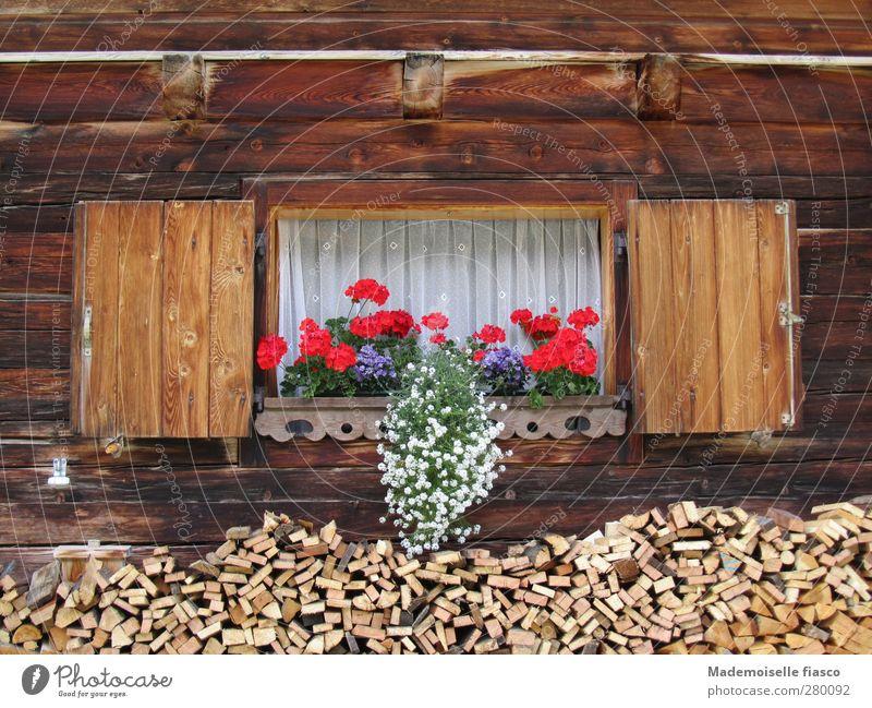Holz vor da Hüttn Sommer Blume Topfpflanze Alpen Hütte Fenster Blumenkasten Blühend Originalität braun rot weiß Natur Ferien & Urlaub & Reisen Stil Tourismus
