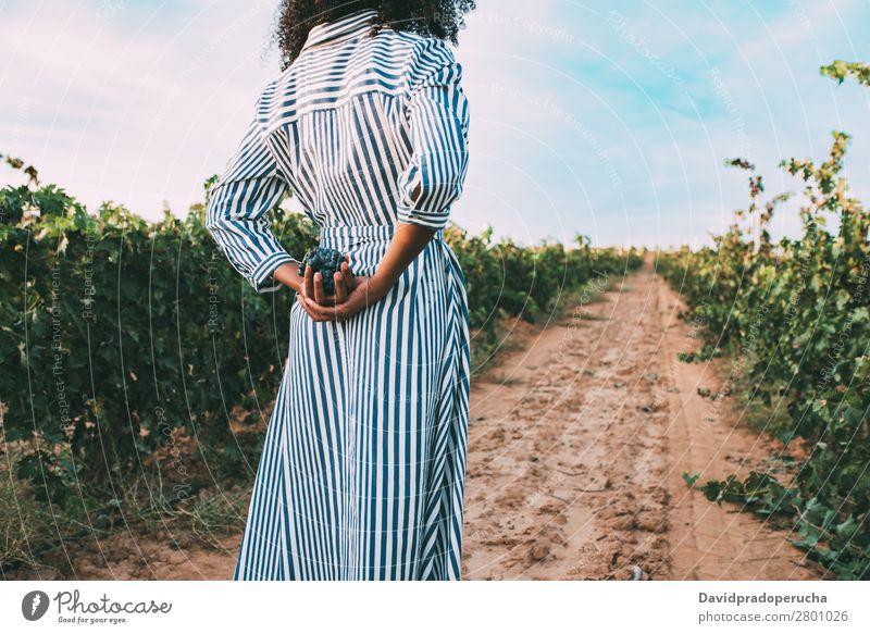 Junge Frau, die auf einem Weg inmitten eines Weinbergs geht. Weingut Weintrauben stehen organisch Ernte Wege & Pfade Landwirtschaft grün Anhäufung ländlich