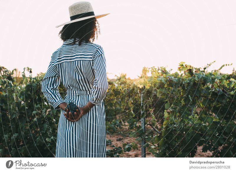 Frau, die auf einem Weg inmitten eines Weinbergs steht. Weingut Weintrauben stehen organisch Ernte Landwirtschaft grün Anhäufung ländlich Verkostung Haufen