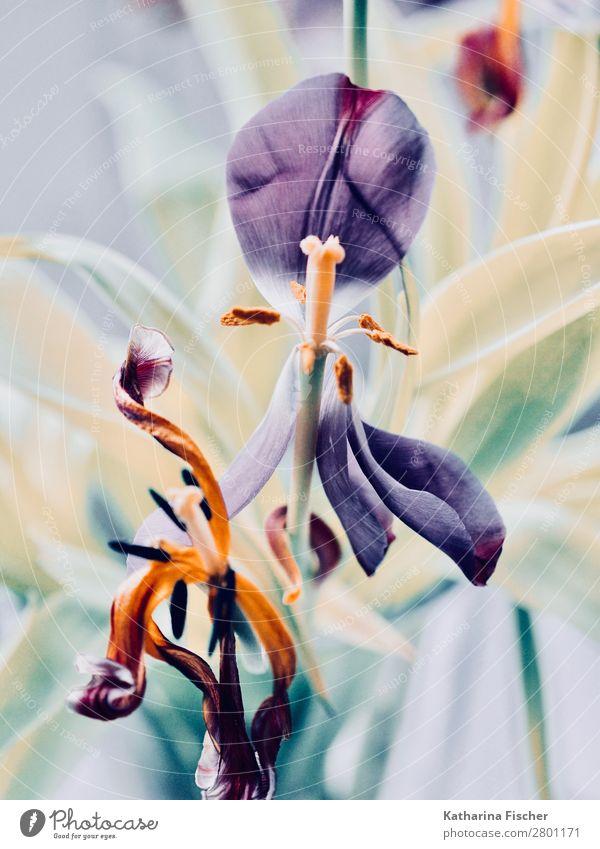 Vergänglichkeit Blüte Blume verblüht Natur Sommer Pflanze grün weiß rot Blatt Herbst gelb Frühling Kunst orange rosa leuchten