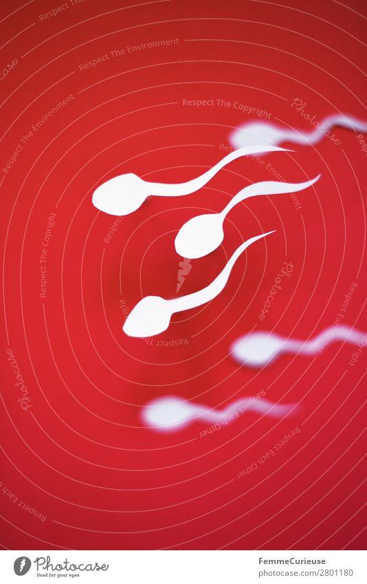 Swimming sperm on red background Zeichen Sex Sexualität Familienplanung Kinderwunsch Spermien fruchtbar rot weiß Papier ausgeschnitten Symbole & Metaphern