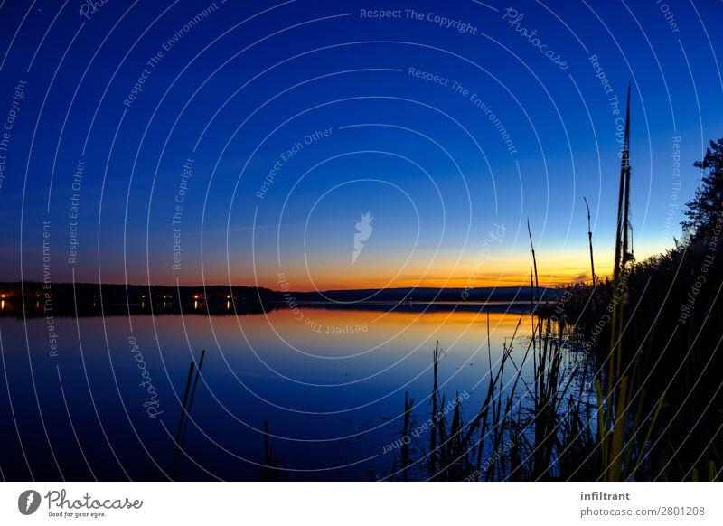 Abendstimmung am See Umwelt Natur Landschaft Wasser Himmel Wolkenloser Himmel Sonnenaufgang Sonnenuntergang Schilfrohr Seeufer Quitzdorfer Stausee ästhetisch