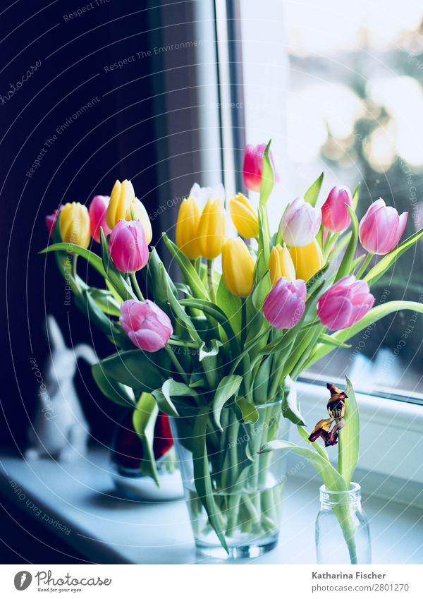Frühlingsstrauß Ostergruß Tulpen Natur Pflanze Sommer Herbst Winter Blume Blatt Blüte Blumenstrauß Blühend leuchten mehrfarbig gelb gold grün violett orange
