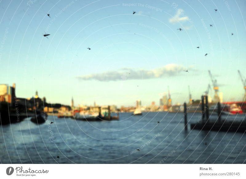 Ins Netz gegangen Himmel blau Sommer Wolken Horizont Schönes Wetter Hamburg Fluss Hafen Insekt Schifffahrt Kran gefangen Spinnennetz Durchblick Hafenstadt