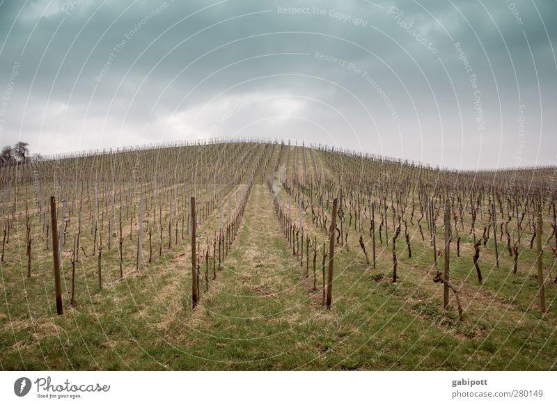 Wein wurde geholt Umwelt Natur Landschaft Erde Himmel Wolken Pflanze Weinberg Weinbau Feld Hügel trist blau braun grün ruhig genießen Horizont Symmetrie