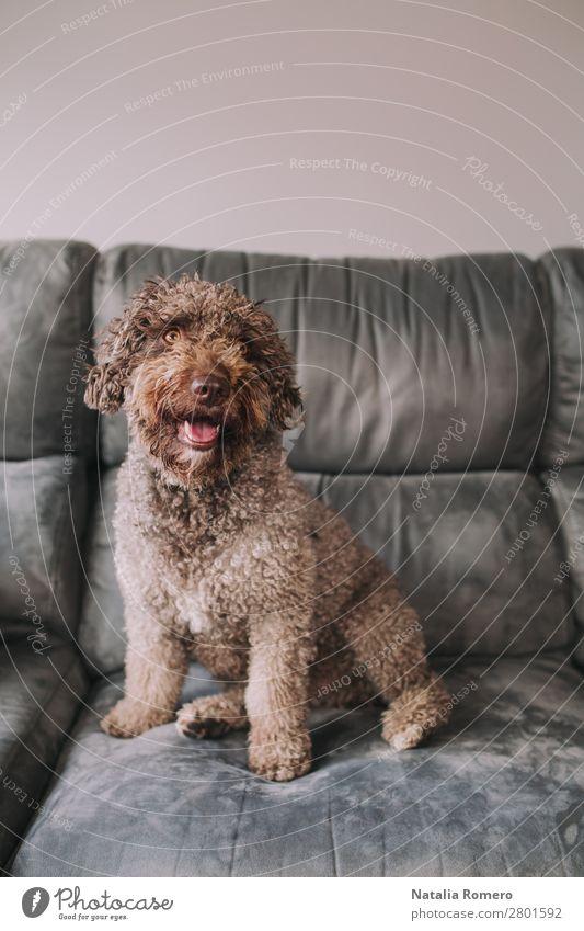 Hund schön Haus Erholung Tier Freude Liebe lustig Gefühle Familie & Verwandtschaft Zusammensein braun Freundschaft Raum Lächeln sitzen