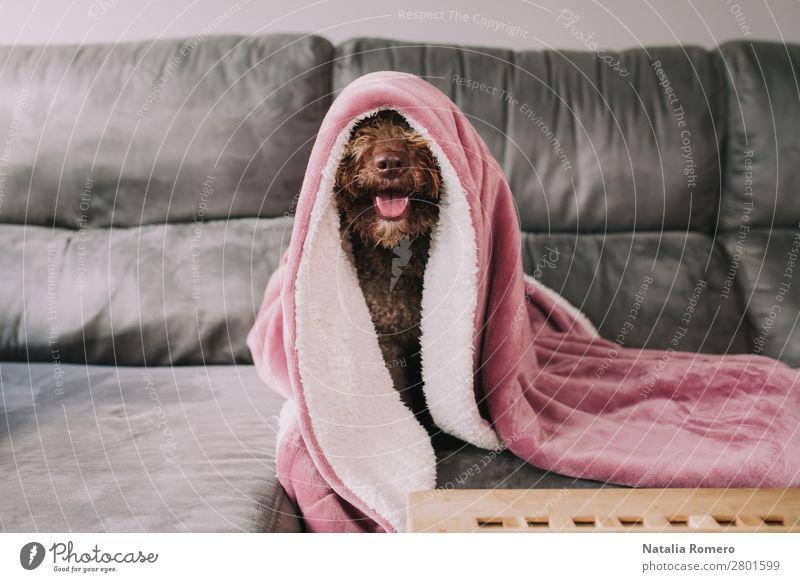 Hund schön Tier ruhig Gesicht Liebe Familie & Verwandtschaft Glück Spielen außergewöhnlich Zusammensein braun Freundschaft Freizeit & Hobby Lächeln Tisch