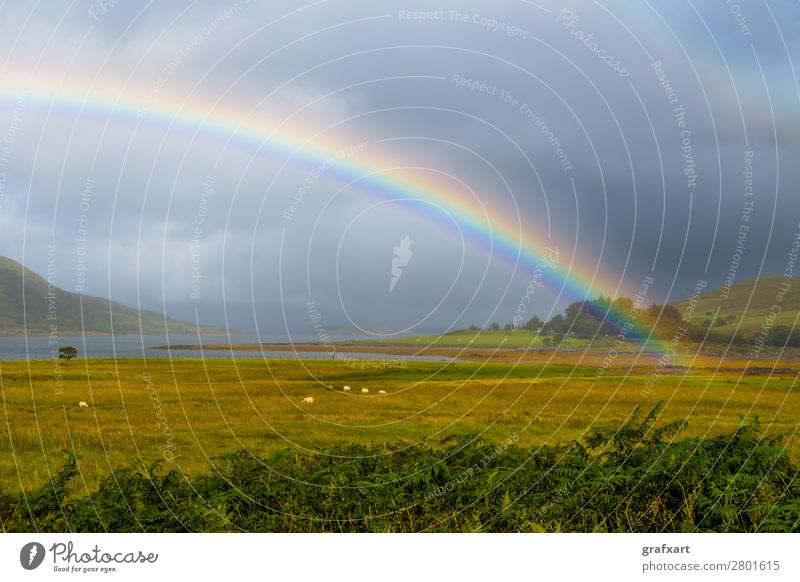 Bunter Regenbogen über Weide mit Schafen auf der Isle of Skye in Schottland landwirtschaft atlantik atmosphäre schön klima klimawandel wolken wolkig küste