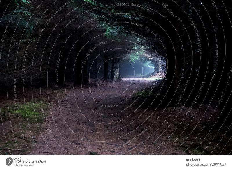 Unheimlicher Pfad durch nebligen, mystischen Wald Angst Dämmerung dunkel Einsamkeit Gasse Gefühle geheimnisvoll spukhaft gruselig krimi Landschaft Licht
