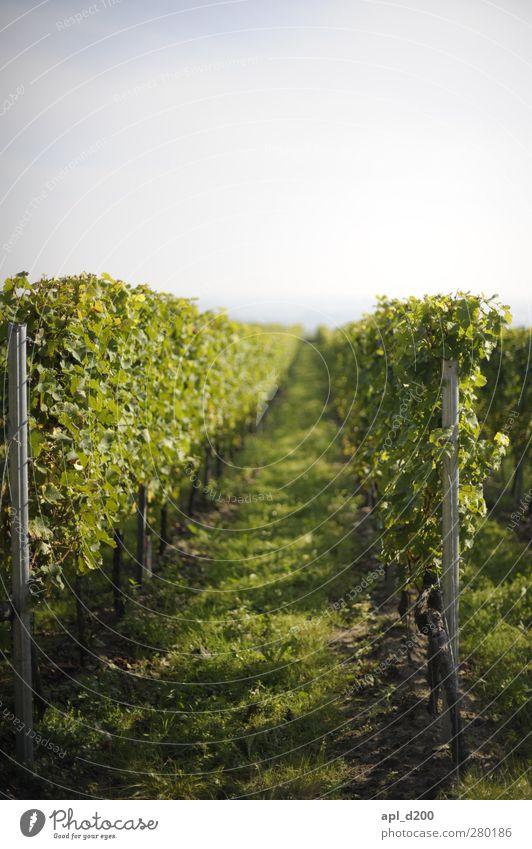 die Pfalz Ernährung Wein Freizeit & Hobby Ferien & Urlaub & Reisen Tourismus Ausflug wandern genießen hängen stehen authentisch Erfolg blau grün Freude