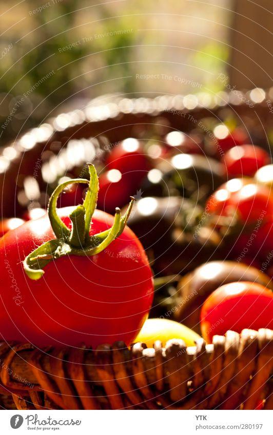 Reife Ernte Natur Pflanze Schönes Wetter Blatt Garten genießen Tomate Diät Gesundheit Gesunde Ernährung vitaminreich Korb pflücken Landwirtschaft Aussaat rot