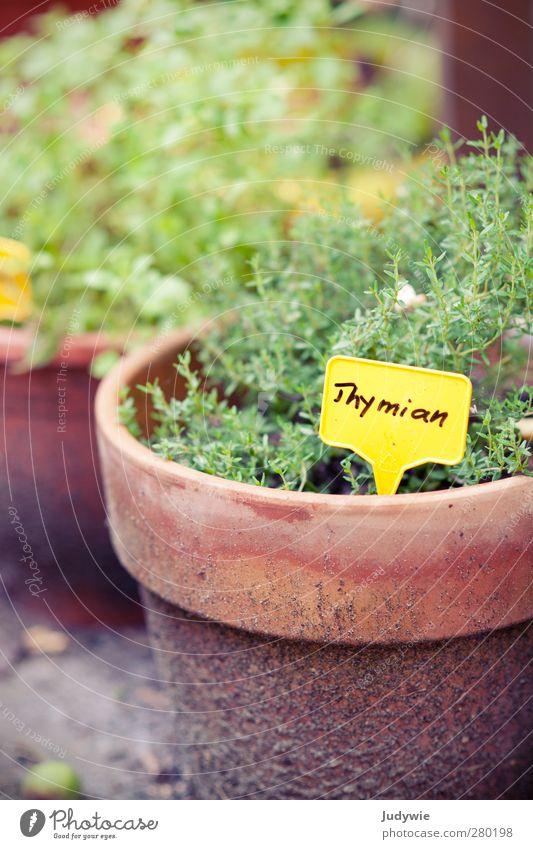 Gartenkräuter II Natur grün Sommer Pflanze gelb Gesundheit Wachstum Gesunde Ernährung Küche Kräuter & Gewürze Balkon lecker Frankreich Medikament Teepflanze