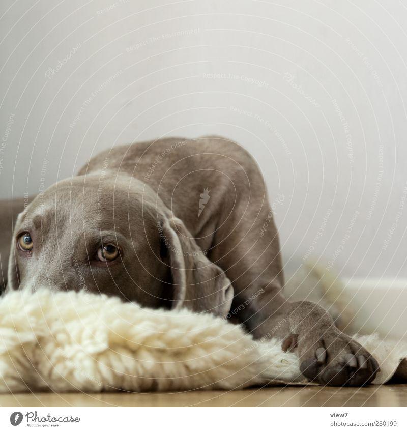 tia Hund Einsamkeit Tier Wand grau Mauer Innenarchitektur braun Raum elegant authentisch frisch Beginn Hoffnung Fell rein