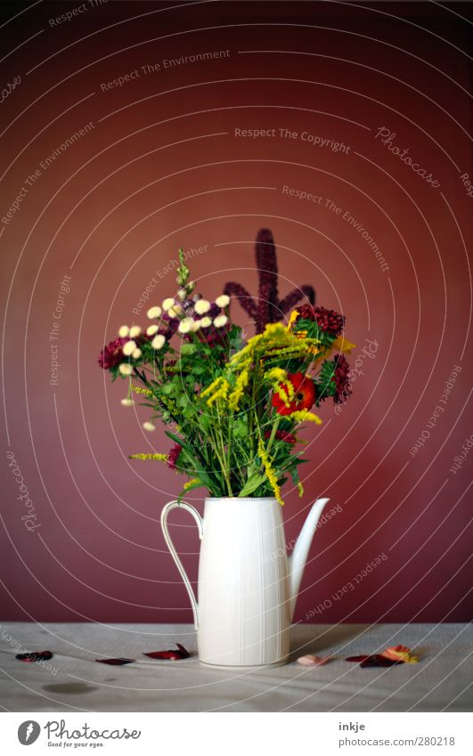 Wiesenblumen-Stillleben schön Blume rot Wand natürlich Stil Mauer Häusliches Leben frisch Dekoration & Verzierung Idylle Geburtstag Tisch Blühend Hochzeit Blumenstrauß