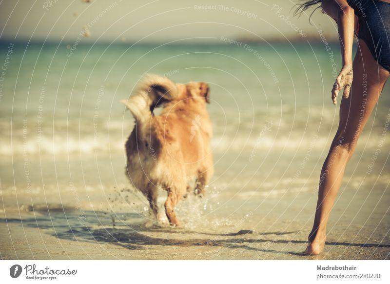 Ferien am Meer Hund Mensch Kind Wasser Ferien & Urlaub & Reisen Sommer Mädchen Freude Strand Tier feminin Spielen Bewegung Küste Wellen