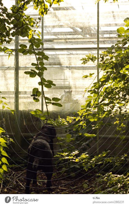 Hund und Katze | Himmel und Huhn grün Sommer schwarz gelb Herbst Garten beobachten Jagd Haustier frech Gewächshaus listig