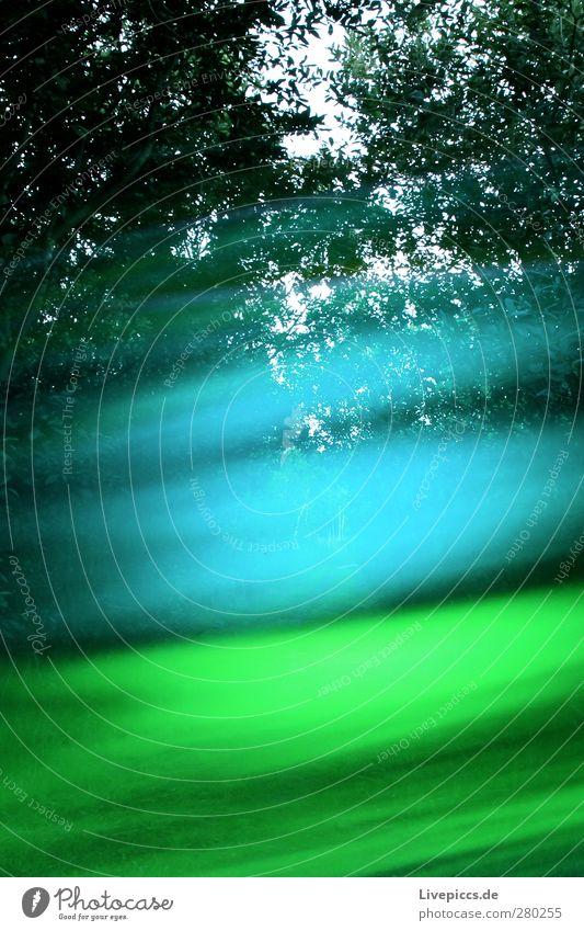 da Weg Kunst Maler Umwelt Natur Himmel Sommer Pflanze Baum Sträucher Blatt Wildpflanze Wald Wege & Pfade leuchten blau grün Lichtspiel Farbfoto Außenaufnahme