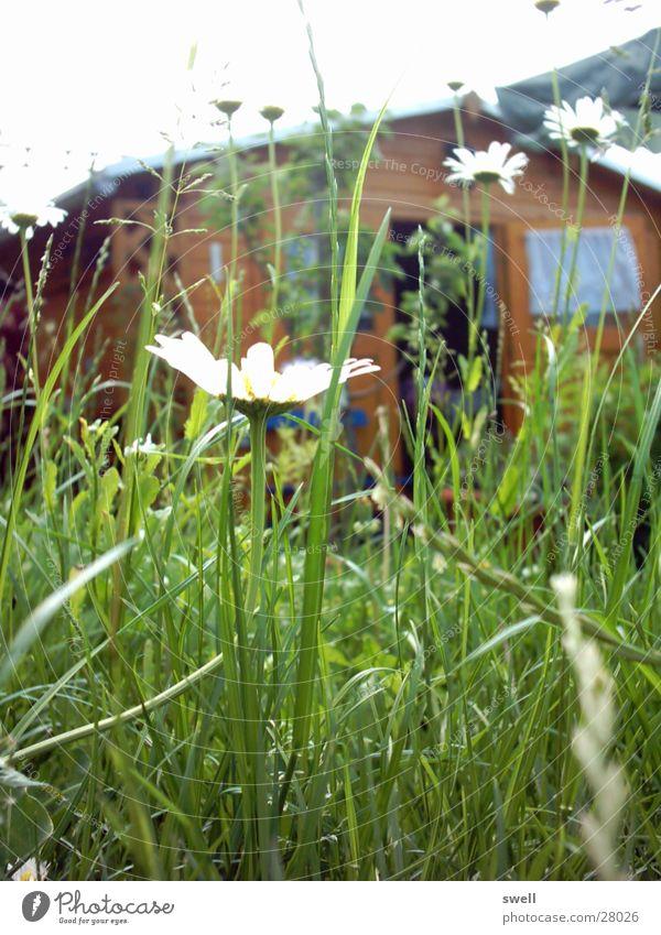 bienen-perspektive Wiese Sommer Blume Gras Garten Pflanze
