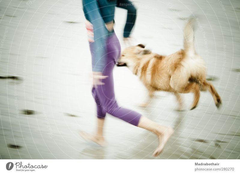 Strandlauf mit Hund Mensch Kind Ferien & Urlaub & Reisen Sommer Mädchen Freude Tier feminin Leben Bewegung Küste Tierjunges Zusammensein Kindheit