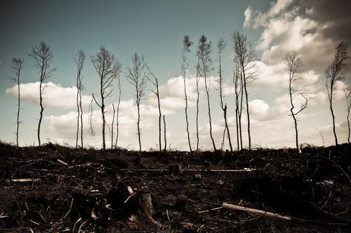 Last Trees Standing Natur Baum Wolken Wald Umwelt Herbst trist Baumstamm Desaster Klimawandel Umweltverschmutzung Forstwirtschaft Baum fällen Endzeitstimmung