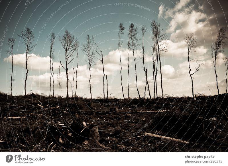 Last Trees Standing Umwelt Natur Wolken Herbst Klimawandel Baum Wald Desaster Endzeitstimmung trist Waldbrand Baumstamm Baum fällen Forstwirtschaft Holzfäller