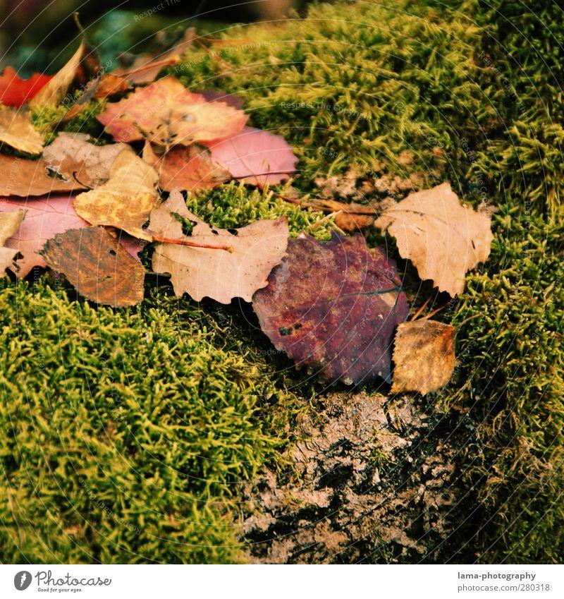 autumn Natur Blatt Herbst nass Jahreszeiten Herbstlaub Moos herbstlich Herbstwetter
