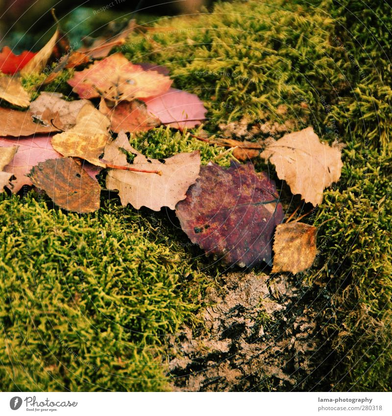 autumn Natur Herbst Moos Blatt nass Jahreszeiten Herbstlaub herbstlich Herbstwetter Farbfoto Außenaufnahme Nahaufnahme Detailaufnahme Makroaufnahme