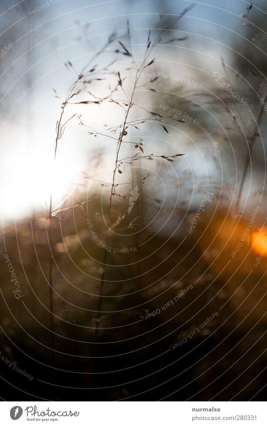 pur Häusliches Leben Garten Kunst Umwelt Natur Pflanze Tier Sonnenaufgang Sonnenuntergang Schönes Wetter Gras Wildpflanze Park Wiese entdecken glänzend genießen