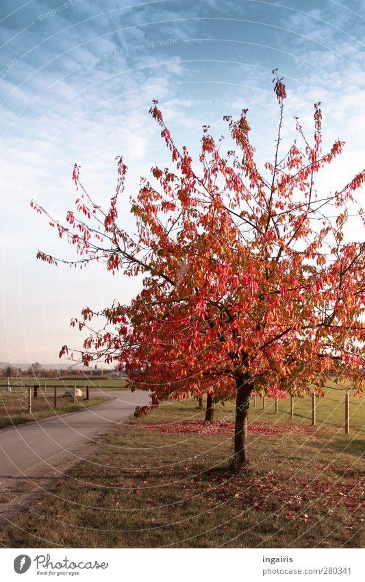 Ganz schnell kommt der Herbst Himmel blau grün weiß Pflanze Baum rot Farbe Wolken Landschaft Wiese Gras Wege & Pfade Stimmung braun