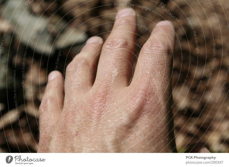 Hand aus dem OFF Mensch braun fliegen Haut maskulin warten Finger Wunsch Ziel Tierhaut berühren Hautfalten Falte fangen Jagd
