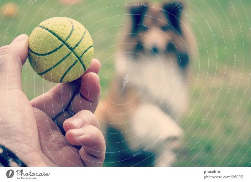 Frauchen, nun wirf doch endlich den Ball. Hund Sommer Freude Tier Liebe Bewegung Wiese Gras Sport Spielen Garten fliegen Freizeit & Hobby Kommunizieren Schönes Wetter sportlich