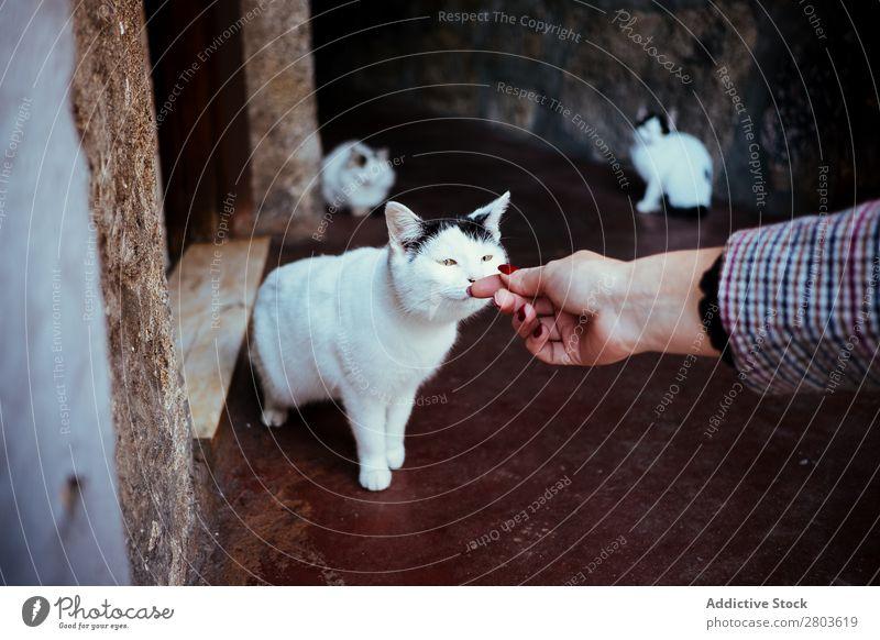Streunende Katze schnüffelnd Gerte Hand Frau Straße Irrläufer Porto Portugal Tier Haustier Geruch Katzenbaby Säugetier Stadt Großstadt lustig Appetit & Hunger