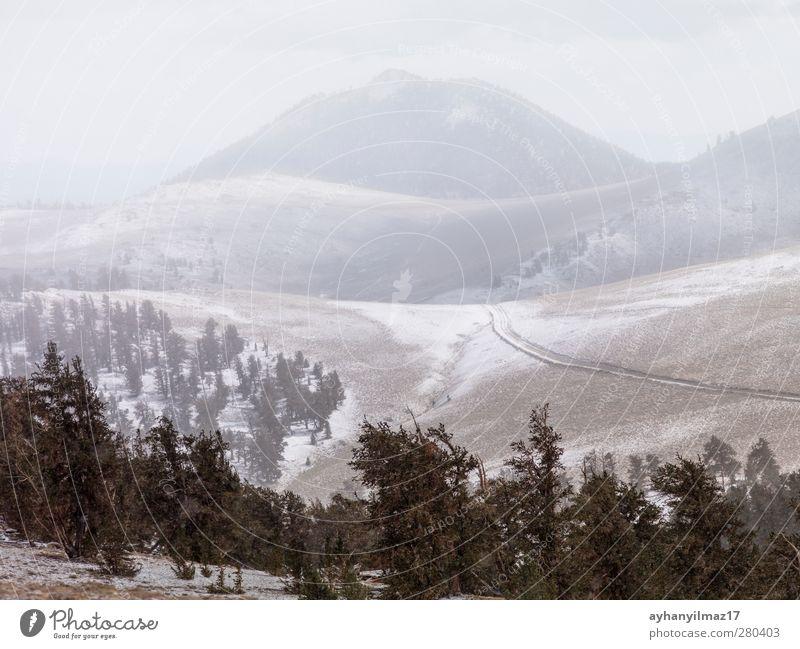 Kiefern und Berge im Hintergrund Borstenkegel Wald Berge u. Gebirge natürlich majestätisch Nebel Menschenleer Fotografie Farbbild Tag Außenaufnahme