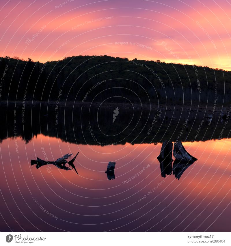 Morgenglut Pflanze Baum Holz Farbe Wald Landschaft Reflexion & Spiegelung Wasser See Silhouette Windstille fluten Sonnenaufgang Morgendämmerung noch Treibholz