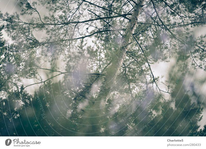 Oh Golden Rain! Umwelt Natur Landschaft Pflanze Tier Herbst Baum Blume Gras Sträucher Moos Blatt Blüte Grünpflanze Wildpflanze Birke Kiefer Feld Wald Holz
